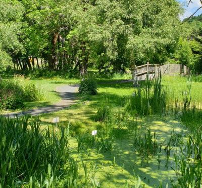 Le jardin botanique au Mazet-St-Voy